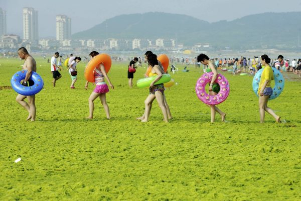 In the picture: Swimmers walk with their floats on a beach covered by algae, in Qingdao, Shandong province, China, July 24, 2015. Picture courtesy/ REUTERS